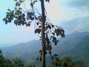 view di atas gunung pancar